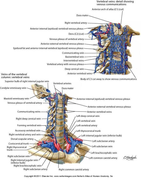 human anatomy atlas netter pdf