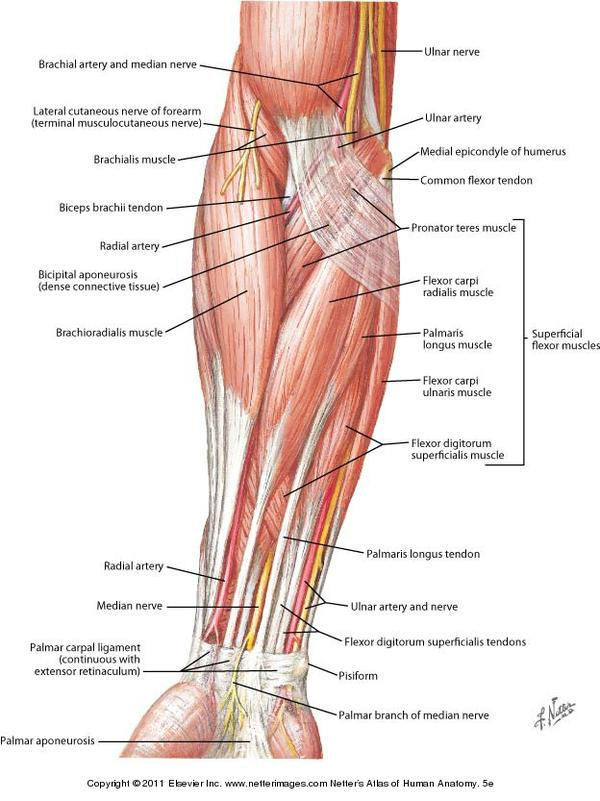 Anatomy Atlas Book Free Wiring Diagram For You
