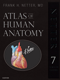 Netter: Netter's Atlas of Human Anatomy 7th Edition